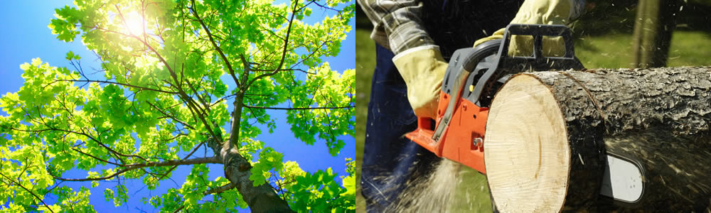 Tree Services Midvale