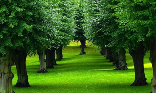Tree Service Salt Lake City Ut Tree Trimming Removal Arbor Tree Care